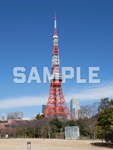 芝公園から見える東京タワー 4