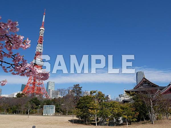 芝公園から見える東京タワー 5