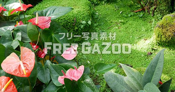 熱帯植物 2