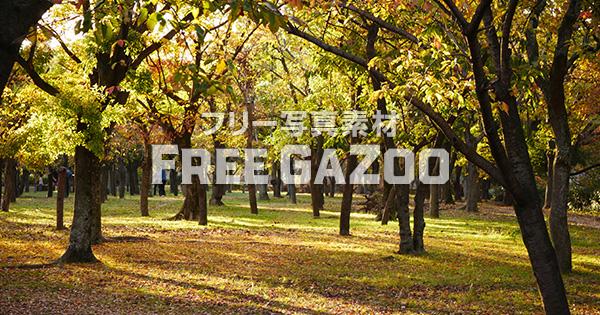 木漏れ日の大阪城公園 1