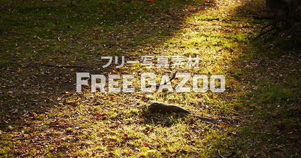 木漏れ日の大阪城公園 2