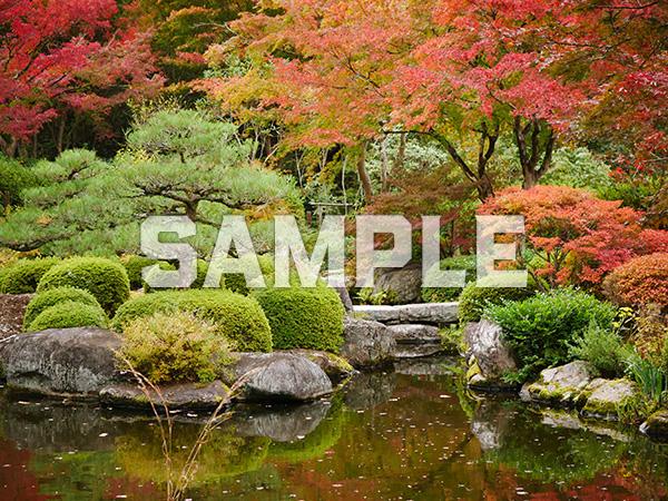 三室戸寺 池泉回遊式庭園の紅葉