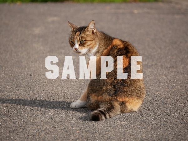 振り向いた猫